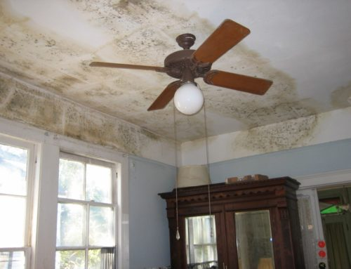 Aromatics for Mold Remediation After Flooding