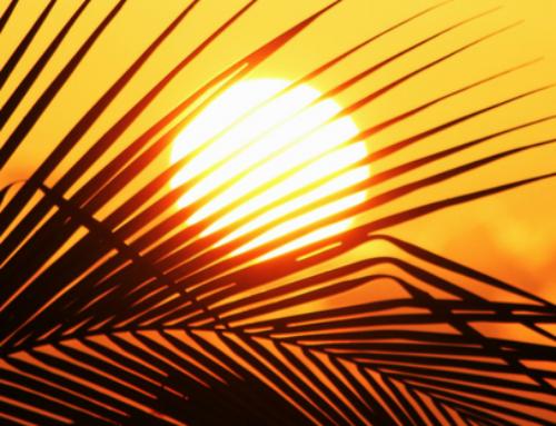 Lipids as Sunscreens?